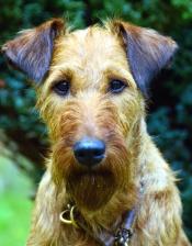 muzzle, necklace, pet, domestic animal, plant, dog