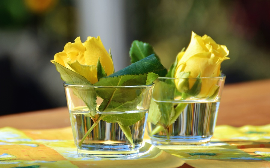 rose, glass, water, flower, petal, yellow rose