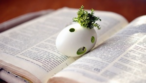 egg, moss, books, words, reading, decoration