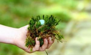 Лишайник, Рука, СОД, посадити, яйце, гніздо