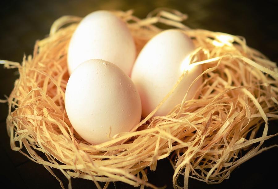 卵は、ネスト、鳥、動物、草