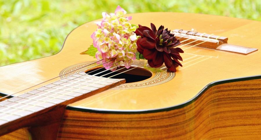 music, musical instrument, string, guitar, flower, petal