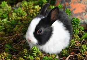 konijn, dier, huisdier, gras, jonge