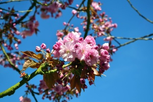 flower, tree, spring, branch,, petal, fruit, sky