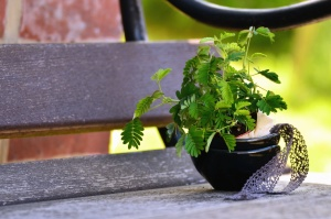 bench, metal, plank, plant, leaf, flower pot