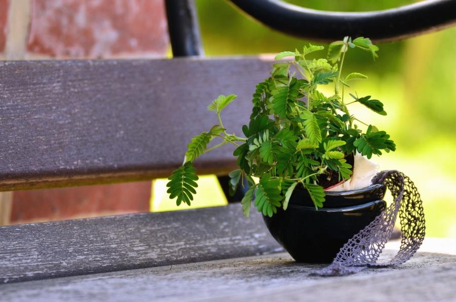 bench, metal, plank, plant, leaf, flower pot
