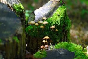 moss, mushroom, plant, forest, stump