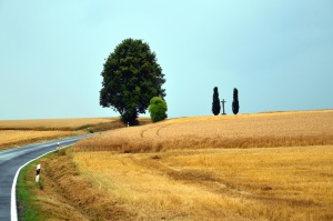 road, wood, wheat, grain, agriculture, summer