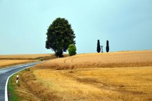 Route, bois, blé, grain, agriculture, été