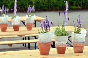 table, bench, flower pot, flower