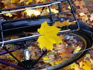 Fahrrad, Rad, Herbst, Pflanze, Baum, Blatt