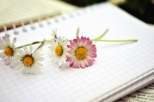 daisy, flower, plant, petal, notes