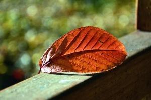 ağaç, Sonbahar, yaprak, bitki, pencere, ahşap