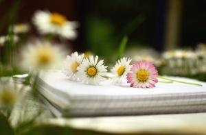 Blume, gänseblümchen, pflanze, papier, anmerkungen, blütenblatt