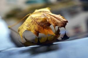 Blatt, Metall, Herbst, Reflexion, Pflanze