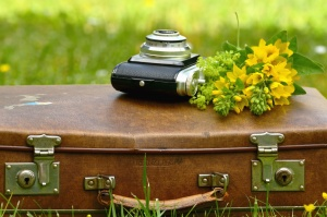 suitcase, flower, photo camera, retro, leather, grass