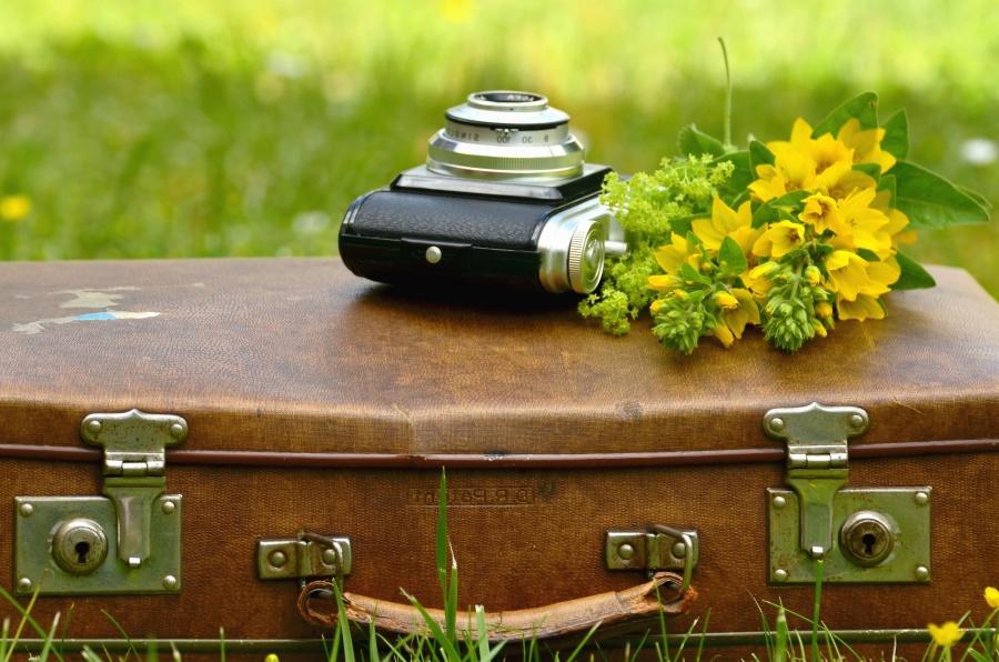 Koffer, blume, fotokamera, retro, leder, gras
