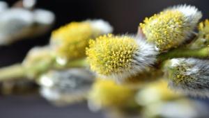 Plante, fleur, branche, nature