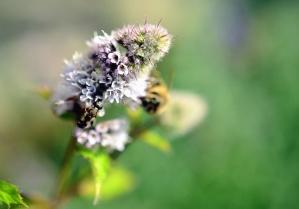 pollen, flower, petal, pollination, honey, insect