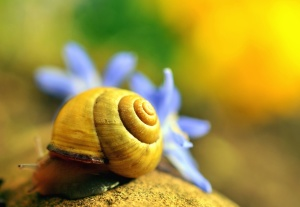 snail, invertebrate, animal, macro, nature