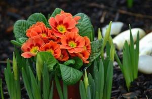 Hoja, pétalo, flor, flores, jardín, planta