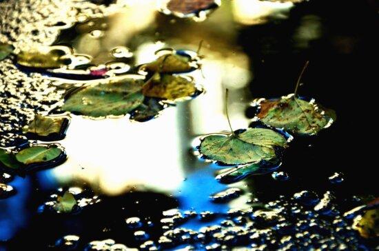 rain, autumn, water, reflection, leaf