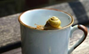 wood, cup, ceramic, snail, invertebrate, animal