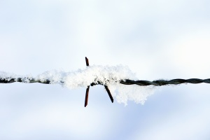 steel, rust, snow, winter, barbed wire, wire, metal, iron