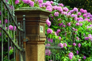 pink flower, plant, gate, fence, leaf