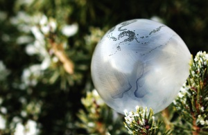 fir, cold, sphere, winter, cold, frozen