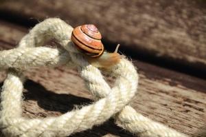 Corde, coeur, escargot, invertébré, animal