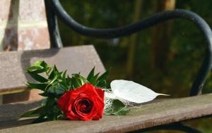 rose, flower, leaf, bench, wood, metal, petal
