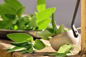 ladle, leaf, plant, metal, spice, food
