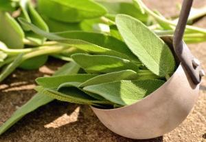 leaf, plant, ladle, spices, tea