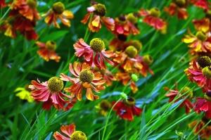 Campo, prado, flor, flores, primavera, vegetación