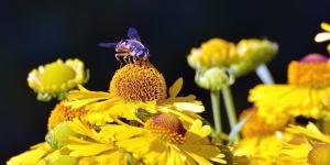 bee, pollen, pollination, flower, plant, honey