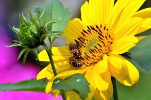 flower, leaf, pistil, petal, pollen, bee