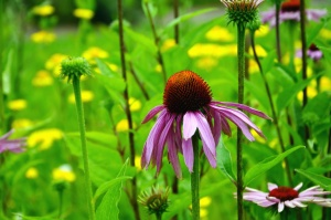 kwiat, łodyga, liść, ogród, Płatek, kwiat