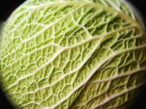 식물, 잎, 야채, 음식, 녹색
