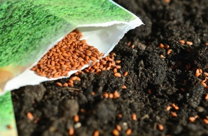 종자, 토양, 식물, 농업