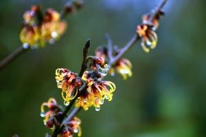 biljka, voda, mokro, stablo, cvijet, grana
