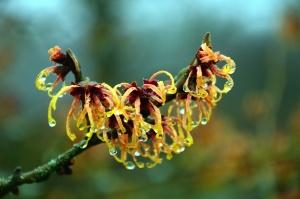 tree, flower, branch, plant, water, drop, wet