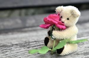 teddy bear, roses, flower, leaf, petal