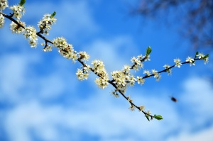 branch, flowers, spring, blue sky, nature