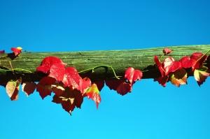 Ciel, branche, feuilles, bois