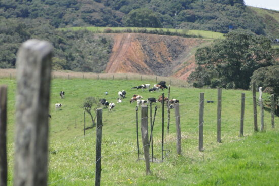 animal, cow, herd, meadow, fence