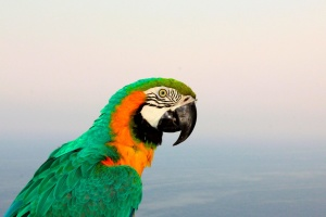 macaw, parrot, tropic, colorful