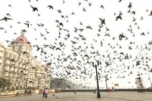 Flock, fugler, dyr, street