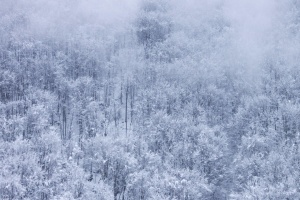 fog, snowflake, mist, snowy, forest, winter
