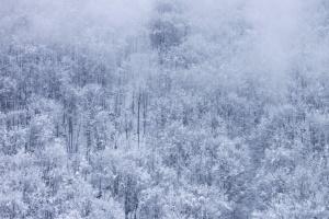 ομίχλη, νιφάδα χιονιού, ομίχλης, χιονισμένο, δάσος, Χειμώνας
